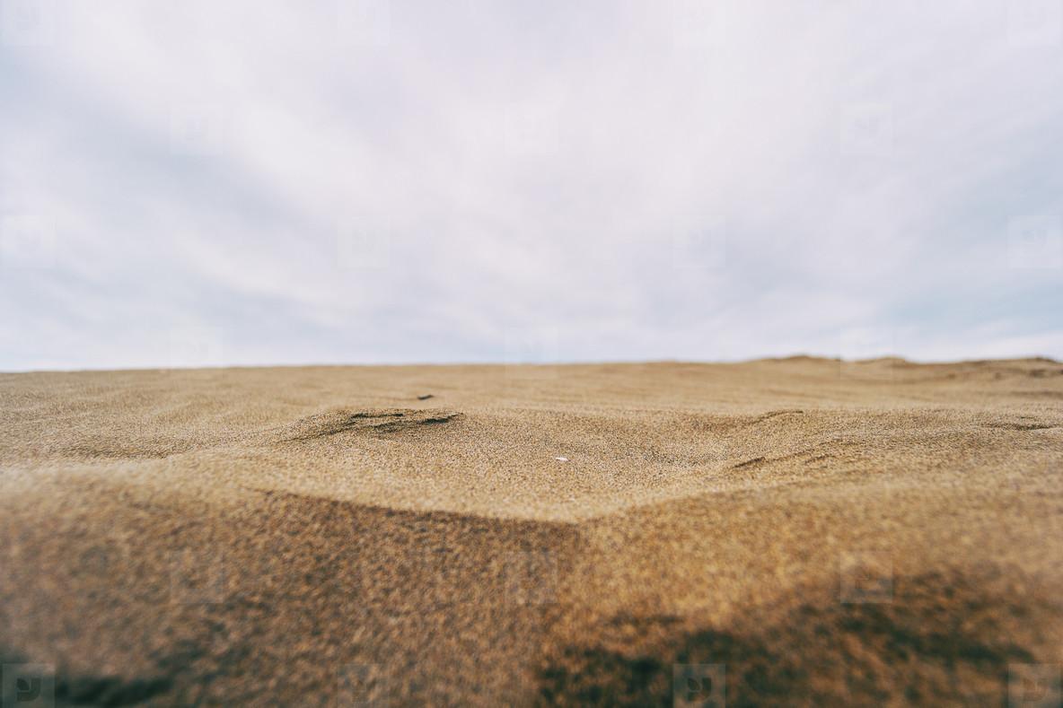 Lonely dunes in the Ebro delta  Tarragona  Spain