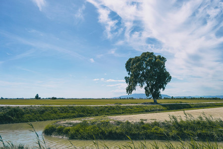 rural landscape in the delta del ebro with the agriculture of the area