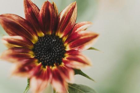 Sunny Flower 5
