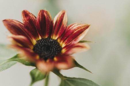 Sunny Flower 4