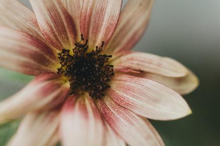 Sunny Flower 3