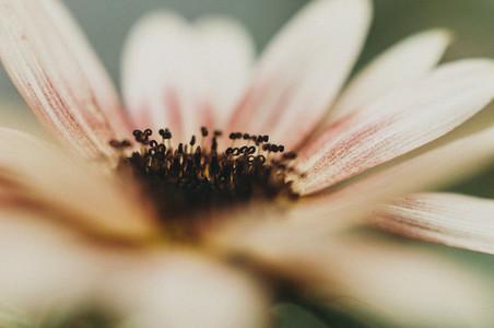 Sunny Flower 2