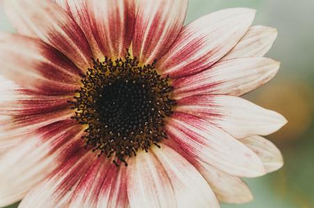 Sunny Flower 1