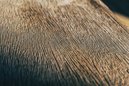 wood texture close up view