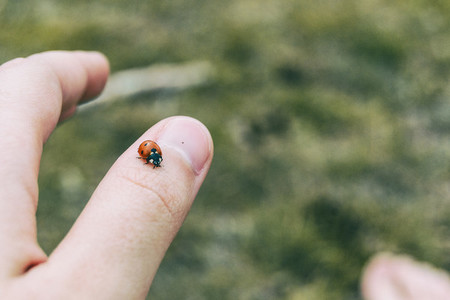 little ladybug perched on the thumb skin of a girls hand