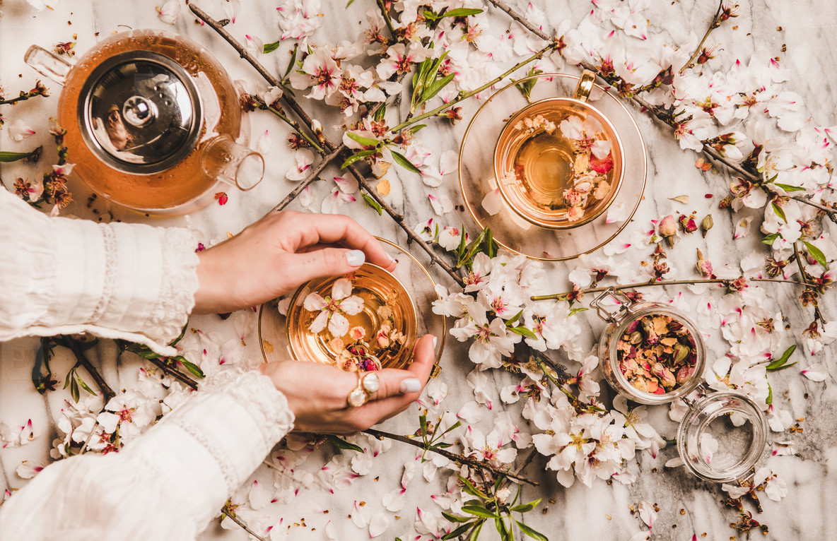 Female hands holding cup of tea over blooming almond branches