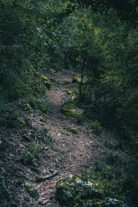 small path that goes into the forest of tarragona