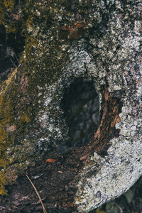 dry gray trunk with many shapes and moss on top