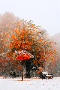 Fall in Kashmir  India