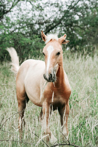 Wild Horse  South Africa