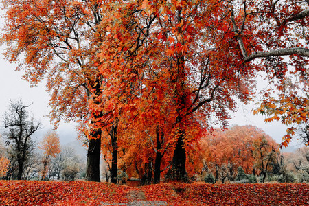 Fall in Kashmir