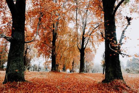 Fall in Kashmir  India