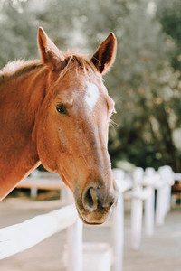 Wild Horse  Sun City  South Africa
