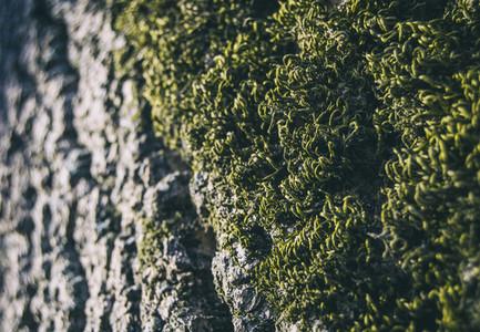 green moss seen from close up