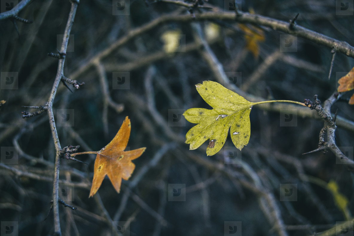 leaves of a tree the color of autumn