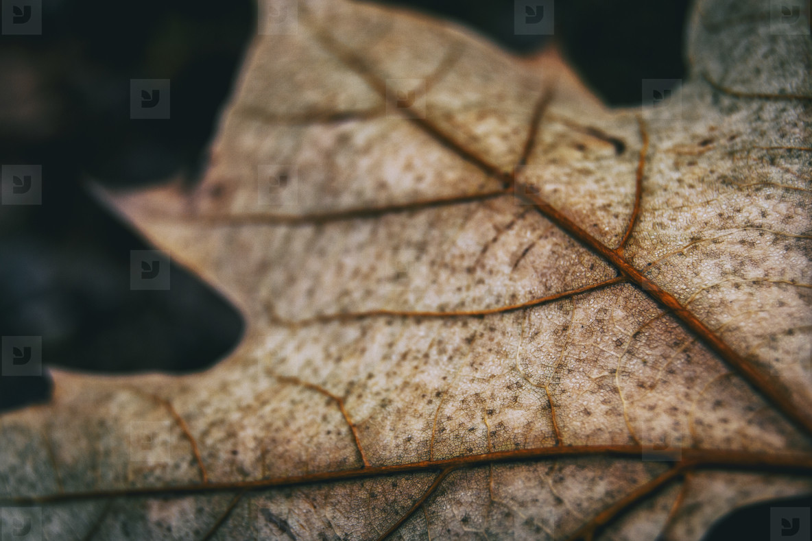 leaf seen from very close where you can see the venation