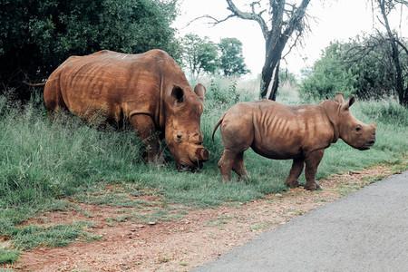 Rhino Baby and Mom