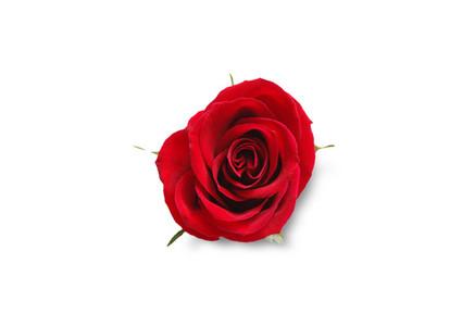 Valentines Day Still Life 6