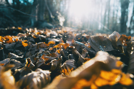 mantle of orange fallen leaves with sunset background