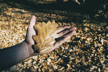 hand of a man holding a fallen leaf from a tree