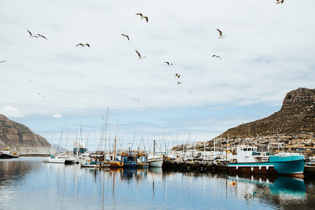 Hout Bay  Cape Town  South Africa