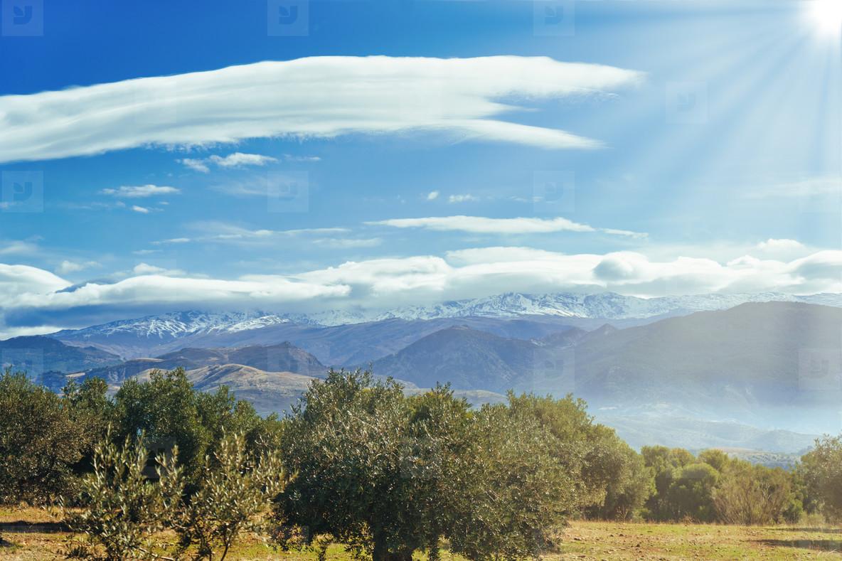 Sierra Nevada as seen from the olive groves in the Llano de la Perdiz in Granada