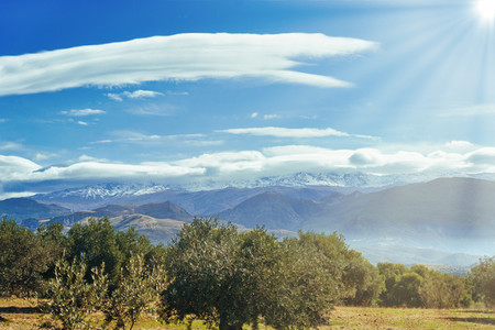 Sierra Nevada as seen from the olive groves in the Llano de la Perdiz in Granada