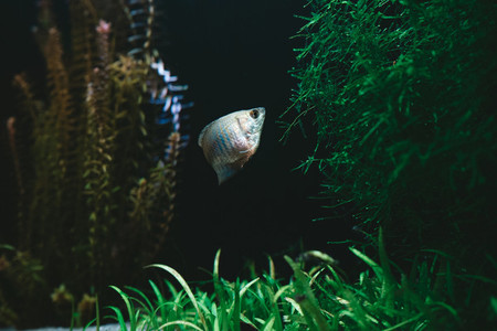 Exotic fish in a collectors aquarium