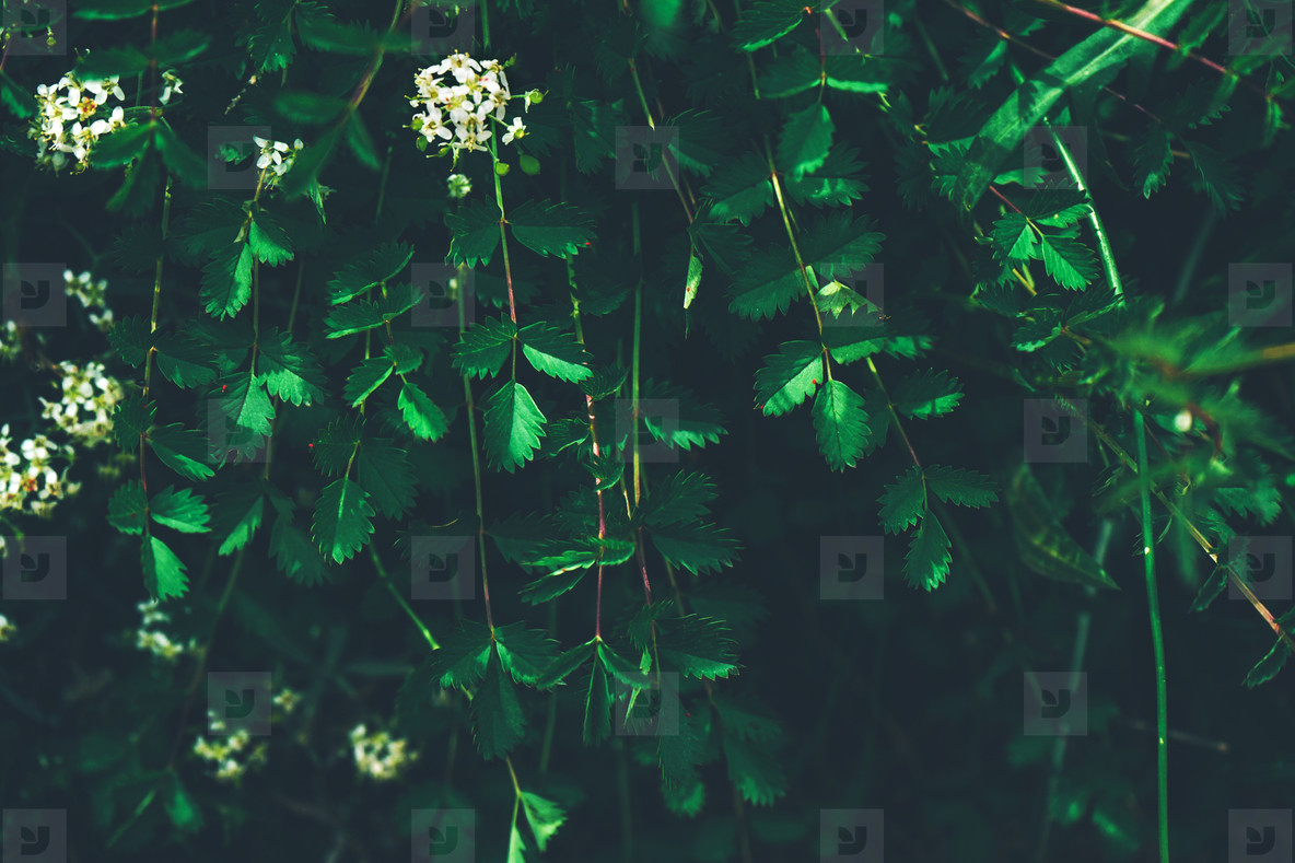 Dark green leaves organic texture