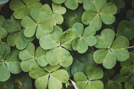 Green pattern image of clovers