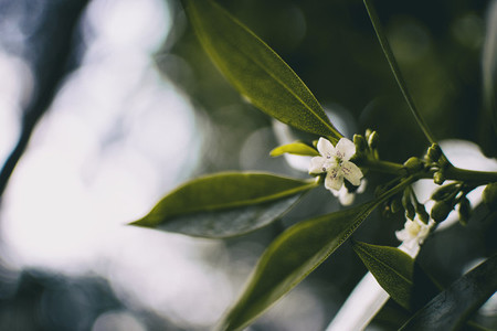 small white flower emerging from a small branch