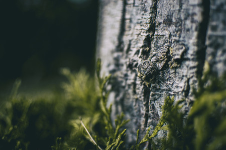 close up trunk of cupressus in nature with unfocused background