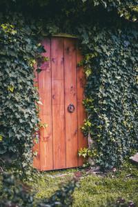 red wooden exterior door wrapped in green ivy vine