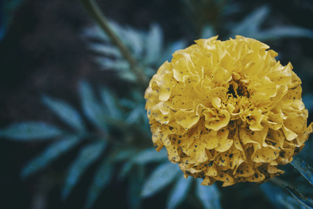 a majestic yellow flower on one side of the image