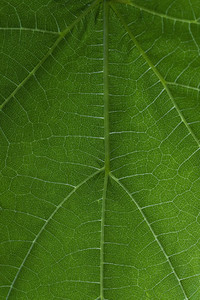 Full frame macro shot pattern vibrant green leaf