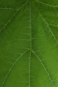 Full frame macro shot pattern vibrant green leaf
