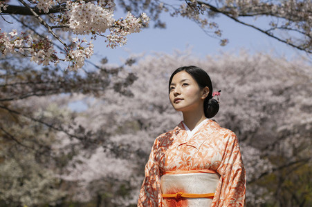 Beautiful young Japanese woman in kimono under cherry blossom tree