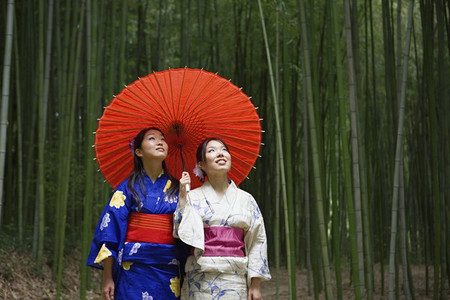 Beautiful young Japanese women in kimonos with parasol in bamboo forest