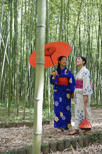Beautiful young women in kimonos with parasol in bamboo forest