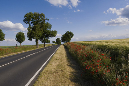Wildflowers growing along sunny idyllic rural road