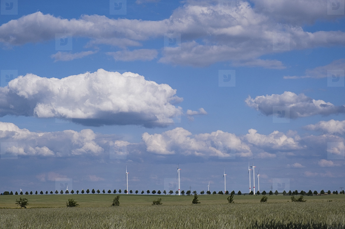 Wind turbines in sunny idyllic rural field below clouds in blue sky