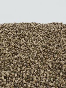 Heap of fresh harvested sugar beets