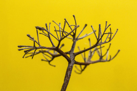 Extreme close up branch on yellow background