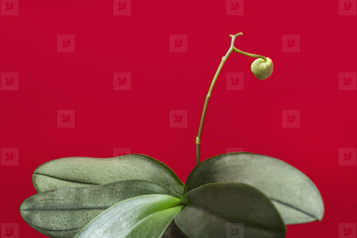 Green plant and flower bud on red background