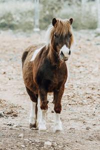 Horse Majorca Island Spain