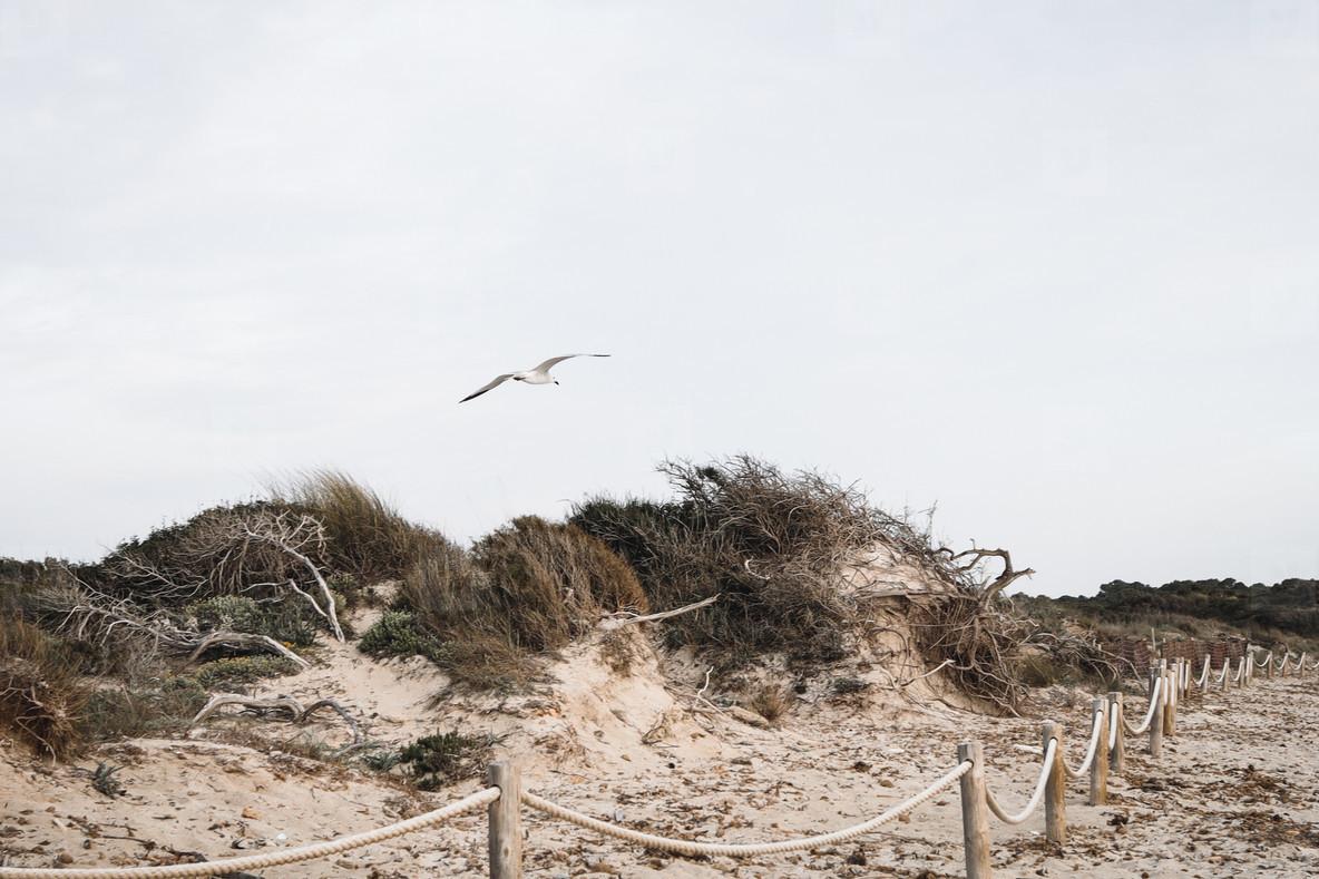 Des Trenc Beach  Mallorca Island  Spain