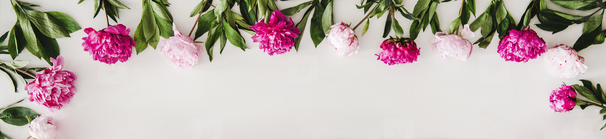 Flat lay of pink and purple peony flowers over white background