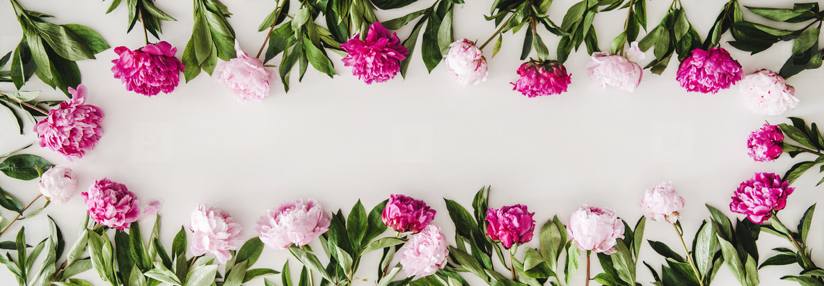 Summer peonies flowers layout on plain white background  copy space