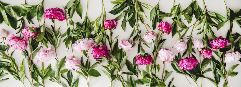 Summer peonies flowers layout on plain white background