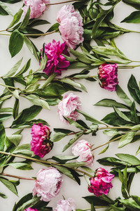 Summer peonies flowers layout  wallpaper  background or texture